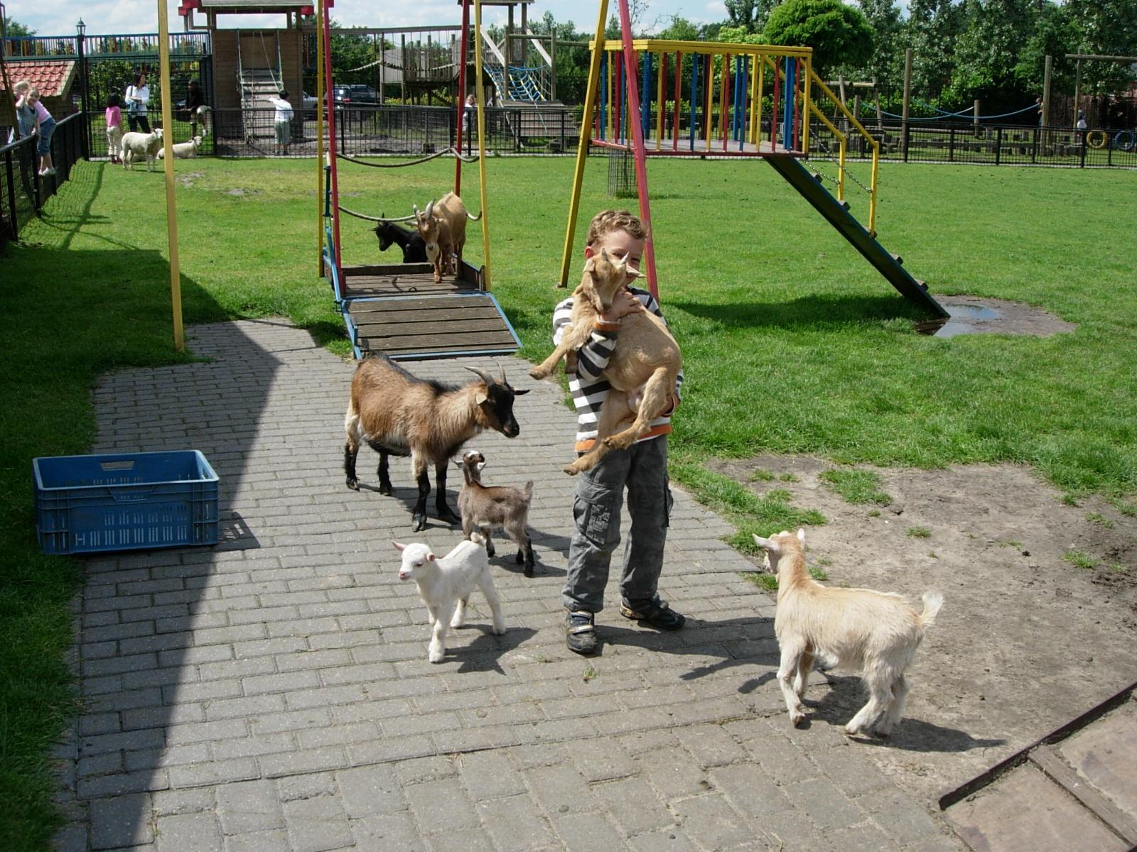 Spelen met dieren